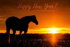 As the sun sets on 2017 my heart is filled with gratitude for all the wonderful people and animals I had the privilege to work with throughout this past year. With great anticipation I look forward to all the good things in store for 2018!   My hope for all of you is that 2018 would be a year of beauty joy and abundance in every area of your life. - Photo by Shelley Paulson