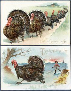 Thanksgiving Run Turkeys, Run