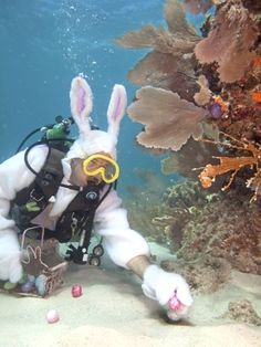 Only in Florida! - Underwater Easter egg hunt!