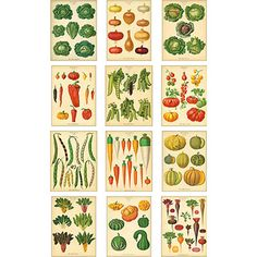 Paper Source vegetable calendar