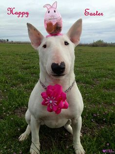 Happy Easter Dog !!! #flower #bunny #holiday