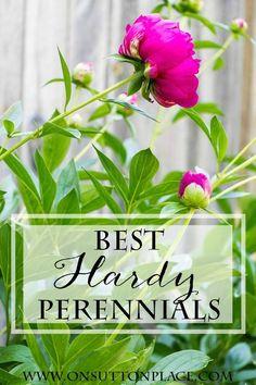 10 Best Hardy Perennials | A list from a DIY Gardener | On Sutton Place