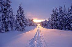 Spur im Schnee | J. Oetinger | Flickr