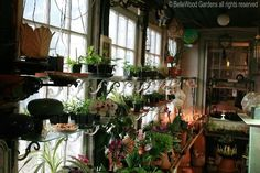 plants for sunrooms | wonderful circular window lets in light for a delicate cymbidium ...