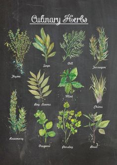 cooking tips - 1114 in Culinary Herbs Chalkboard Wall Poster by ThePaperWing Herb Planters, Herb Pots, Planter Ideas, Chalkboard Drawings, Chalkboard Art, Culinary Tattoos, In Natura, Herbal Oil, Kitchen Art
