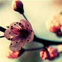 72 Spring iPad wallpapers