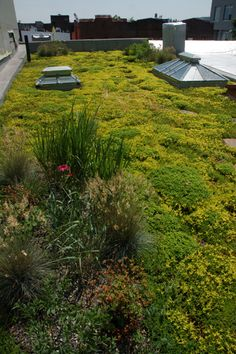 I think every flat roof top should house a garden, or some type of green space