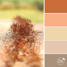 Earthy Connection colour palette by Brand Smoothie