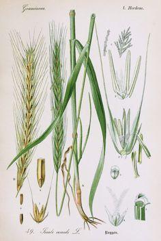 the wonderful world of botanical illustration!