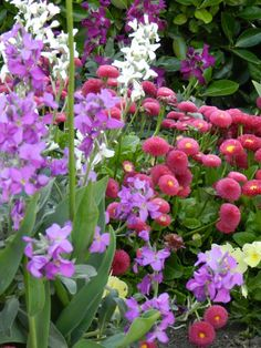 mix spring flower colors...