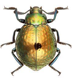 Euhemicera smeraldina