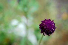 ♔ romantic flower
