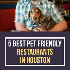5 Best Pet Friendly Restaurants in Houston. We've assembled this list of pet-friendly restaurants in Houston.  #houston #texas #htown #houstontx #htx #dallas #atlanta #newyork #miami #houstontexas #losangeles #music #chicago #love #hiphop #explorepage #austin #california #fashion #houstonhairstylist #houstonevents #florida #explore #neworleans #houstonnightlife #rap #sanantonio #art #repost #bhfyp