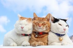 Sweet Shiro cuddling with friends