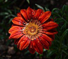 Brooch, Plants, Jewelry, Calla Lilies, Flowers, Red, Majorca, Jewlery, Jewerly