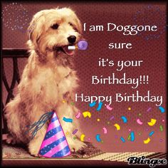 I Am Doggone Sure It's Your Birthday!!! Happy Birthday birthday happy birthday birthday quotes happy birthday quotes birthday gifs happy birthday gifs