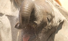 Alegria, Zoo de Lisboa