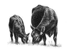Cow and Calf Clip Art - Bing Images