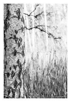 Tree Roomkouter Temse Steendorp Boom Berk