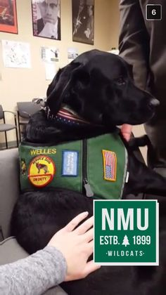 It's the dog days of...winter? Meet Welles, a pup that sure helps brighten our winter days!