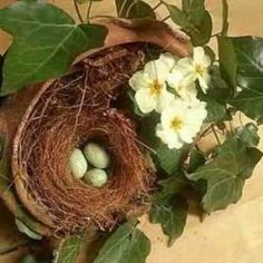 Welcome to my birds nests crafts page. I want to show you how easy it is to make really attractive birds nest decorations at any time of the year. So in this article I'm working my way through the seasons making birds nests and taking pictures as I...