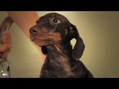 If you love dachshunds, you MUST watch this!!