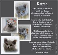 Van Tiggelen, Katzen, Gedichte, Menschen, Leben, Weisheit, Welt, Erde, Gesellschaft, Gefühle, Grüße,