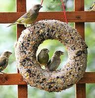 vogeltaarten zelf maken - Google zoeken