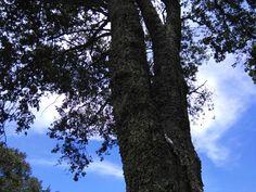 Encino Landscape, Plants, Scenery, Plant, Corner Landscaping, Planets