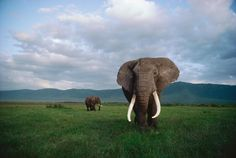 Picture of elephants in tanzania
