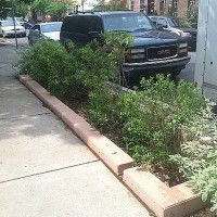Stormwater planter over infiltration trench on 13th st between Wharton and Reed