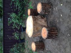 Log table and chairs by my gardener friend Hector.  Another use of fallen trees from that big Nov windstorm in Pasadena.