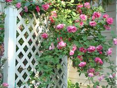 flower gardens with a white picket fence - Google Search