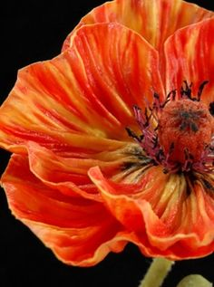 Natural Touch Orange Poppy Natural Touch 25 Poppy Orange & Yellow (flower 5 width) Flowers The post Natural Touch Orange Poppy appeared first on Easy flowers. Burgundy Flowers, Orange Flowers, Red Burgundy, Poppy Flowers, Yellow Roses, Pink Roses, Macro Flower, Flower Art, Cactus Flower