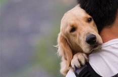 Vet-Approved Human Medications for Pets