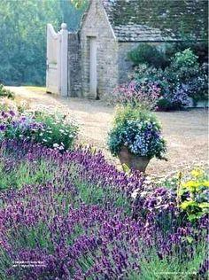 lavender garden & stone cottage