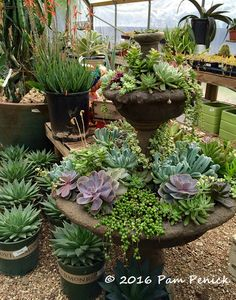 Use succulents to evoke water in a tiered fountain, and spare the actual H2O. Spring visit to Hill Country Water Gardens & Nursery   Digging