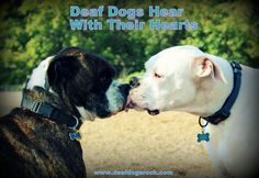 Lots of great info on deaf dogs