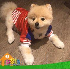 Felicidades Panamá 🇵🇦   #PetsWorldMagazine #RevistaDeMascotas #Panama #Mascotas #MascotasPanama #MascotasPty #PetsMagazine #MascotasAdorables #Perros #PerrosPty #PerrosPanama #Pets #PetsLovers #Dogs #DogLovers #DogOfTheDay #PicOfTheDay #Cute #SuperTiernos