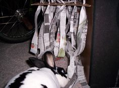 Newspaper hanging strips for ripping down, shredding, and running through. Would do this with tissue paper instead as May likes to eat EVERYTGING and I would worry re ink poisoning but tge idea is fab :-). Bunny Cages, Rabbit Cages, House Rabbit, Rabbit Toys, Bunny Rabbit, Funny Bunnies, Baby Bunnies, Cute Bunny, Reptiles