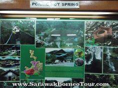 Kinabalu Park, Sabah Kinabalu Park, Aquarium, Spring, Painting, Art, Goldfish Bowl, Art Background, Aquarium Fish Tank, Painting Art