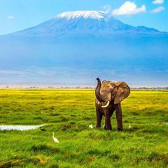 #MountKilimanjaro #Kenya Avalon Waterways, Crystal Cruises, Different Planets, P&o Cruises, Holland America Line, Mount Kilimanjaro, Norwegian Cruise Line, Celebrity Cruises, Disney Cruise Line