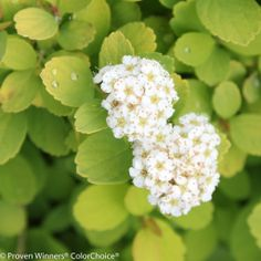 How to Plant a Shrub from Proven Winners