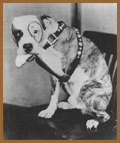 Pete the Pup was poisoned by someone who gave    him meat laced with glass. There is also an urban    legend that Pete the Pup was buried with Alfalfa    but we've found no evidence of that and Pete the    Pup died long before Alfalfa.  Alfalfa loved hunting and apparently there is a dog    on his tombstone that reflects that so that may    have been a part of what prompted the urban    legend about Pete the Pup.