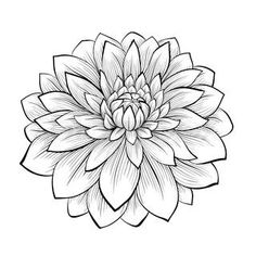Illustration about Beautiful monochrome, black and white seamless background with flowers dahlia. Hand-drawn contour lines and strokes. Illustration of line, dahlia, color - 42987055 Dahlia Flower Tattoos, Tattoo Flowers, Drawing Flowers, Flower Tattoo Drawings, Aster Flower, Dahlia Flowers, Glass Flowers, Flowers Garden, Dahlia Noir