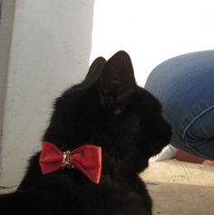 #lovemycat #bow #christmas #mili #blackcat