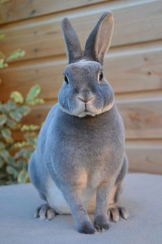 Blue otter rex rabbit. I wantses it.