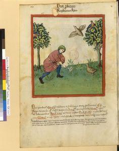 Tacuinum Sanitatis - BNF Ms. Latin 9333 Date: Rhineland, mid- 15th century.  fol 64v Rebhühnereier