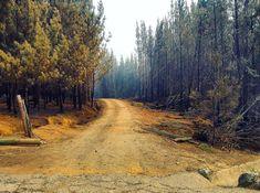 "Felipe Andrés Ibáñez Lagos on Instagram: ""🌳🛤🌳"" Ibanez, Country Roads, Instagram, Places"