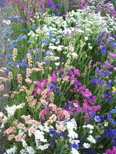 Everlasting Flowers in a Cutting Garden Types Of Flowers, Cut Flowers, Dried Flowers, Beautiful Flowers, Dry Garden, Garden Yard Ideas, Summer Garden, Garden Tips, Garden Design Pictures